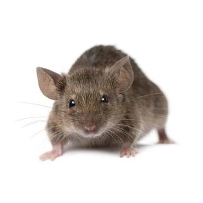 Фото мышей