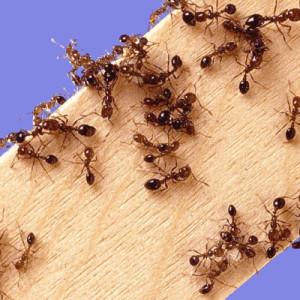 Фото муравьев