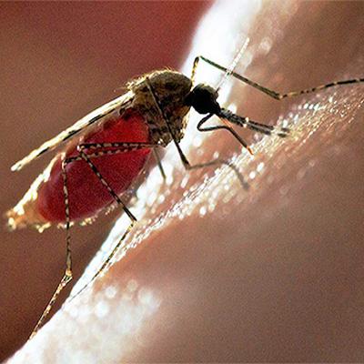 Фото комаров